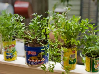 Garden Planning and Planting: All in the Can