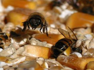 Honeybees I.