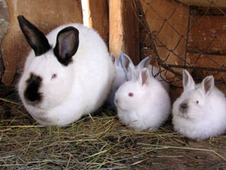 Rabbits: Introduction Part I of 4