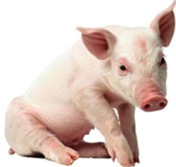 Stocking Up: Swine and Dine