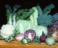 Gardening: Brassica is Cabbage I of II