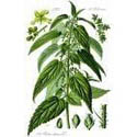 Herbs:  Gout and Kidney; a new experience