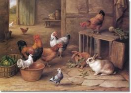 Rabbits and Chickens:  Winter Care