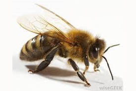 Honeybee sightings March 2, 2014