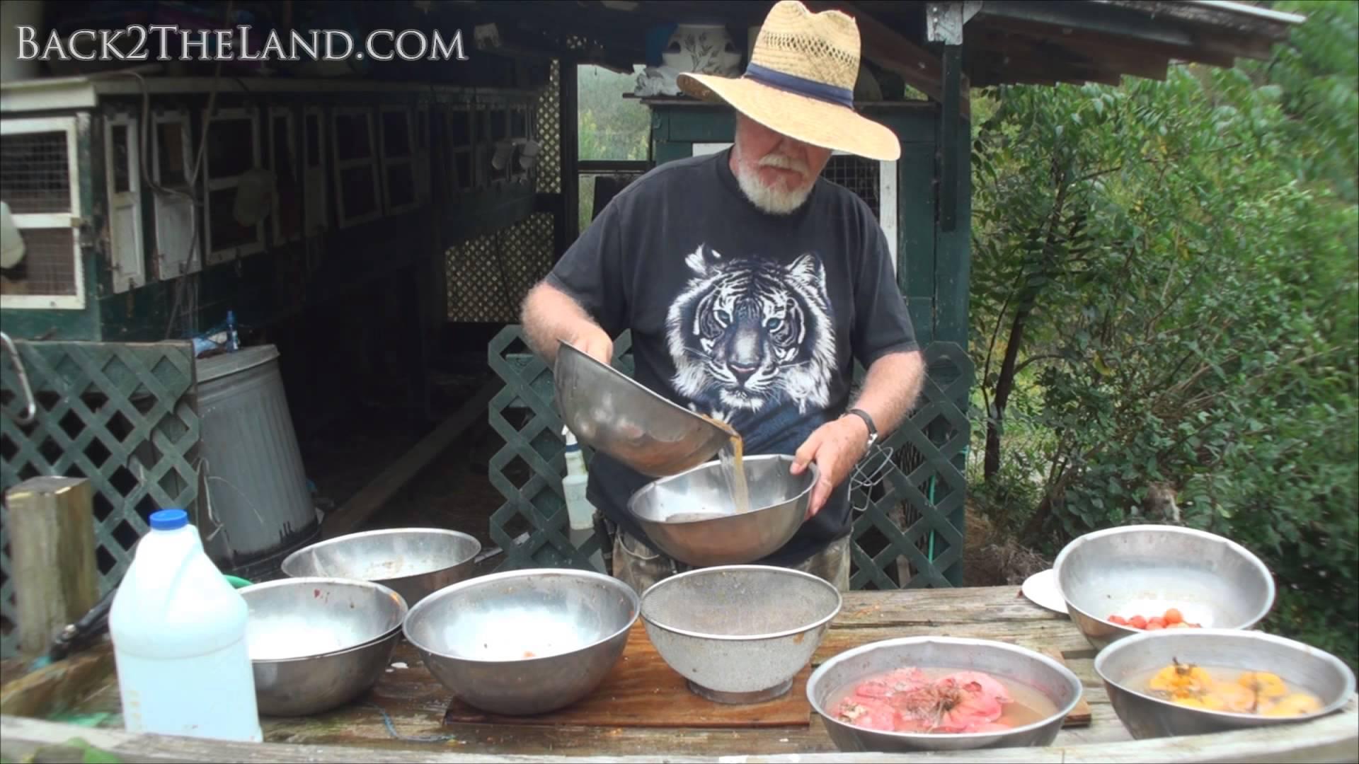 Harvesting Tomato Seeds