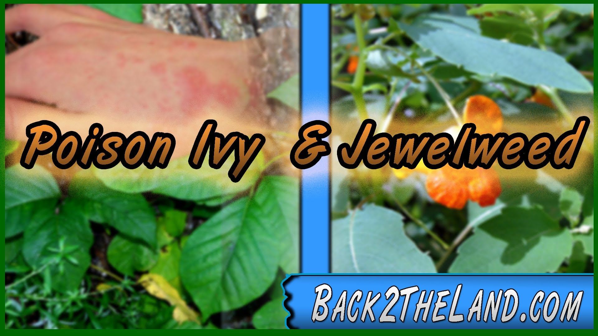Poison Ivy and Jewelweed